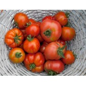 Tomate BIO 500g