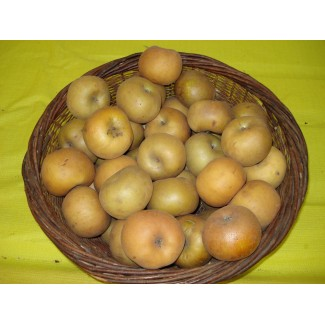 Pomme reinette du canada