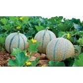 Melon PIECE (1 kg env)