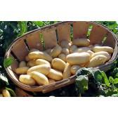 Pomme de terre nouvelle Béa colis 10kg