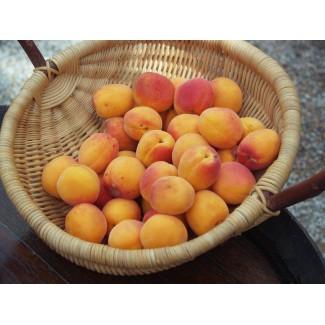 Abricot 1 kg