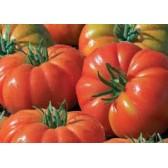 Tomate marmande pleine terre